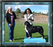 CH Shiver Me Timbers of Sundance (Pirate) wins BOB under judge Donna Wright at May Days show 9-6-15